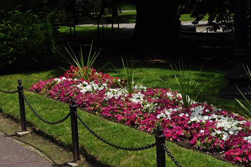 A Garden in the Garden