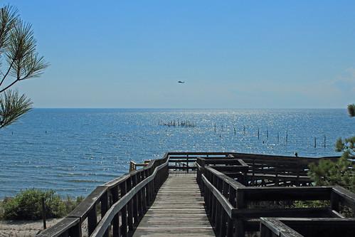 trees sky beach virginia easternshore helicopter boardwalk chesapeakebay kiptopekestatepark