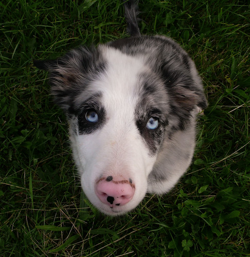 Blue-eyed baby boy
