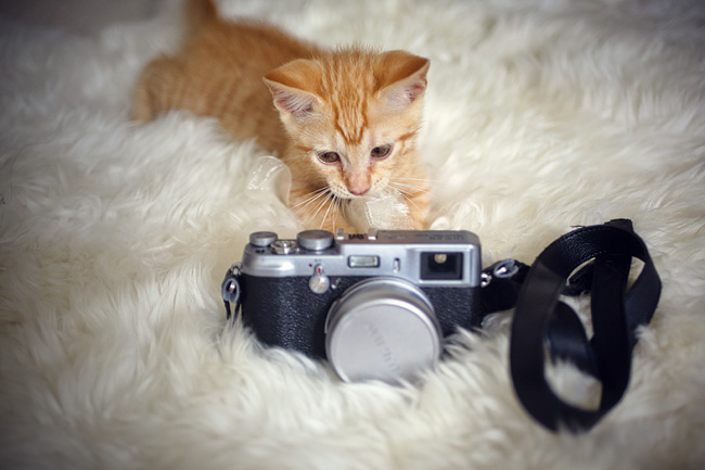Max | Cat Photography | Foster Kitten 2012.06.11
