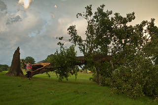 Tree Down in East Texas Storms