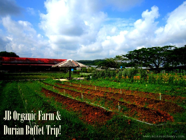 JB Organic Farm & Durian Buffet Trip