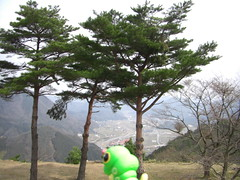 Caterpie in Asago, Hyogo 10 (Takeda Castle Remains)