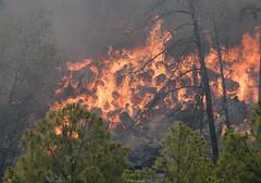 Bastrop Fire
