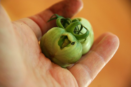 tomato trauma