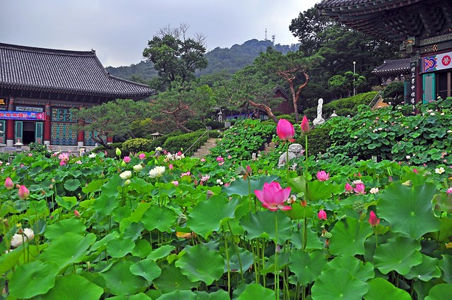 Lotus Blossom View, Bongwon Temple--Seoul