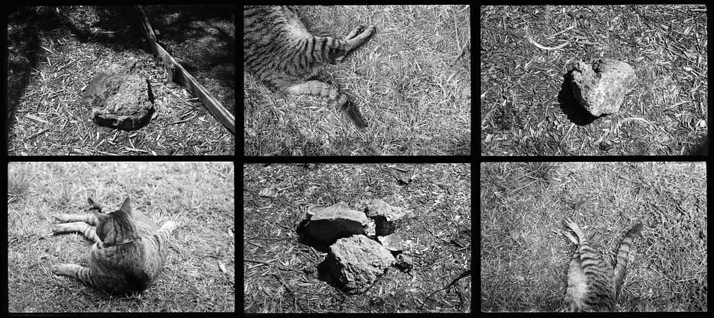 Cat & Rocks