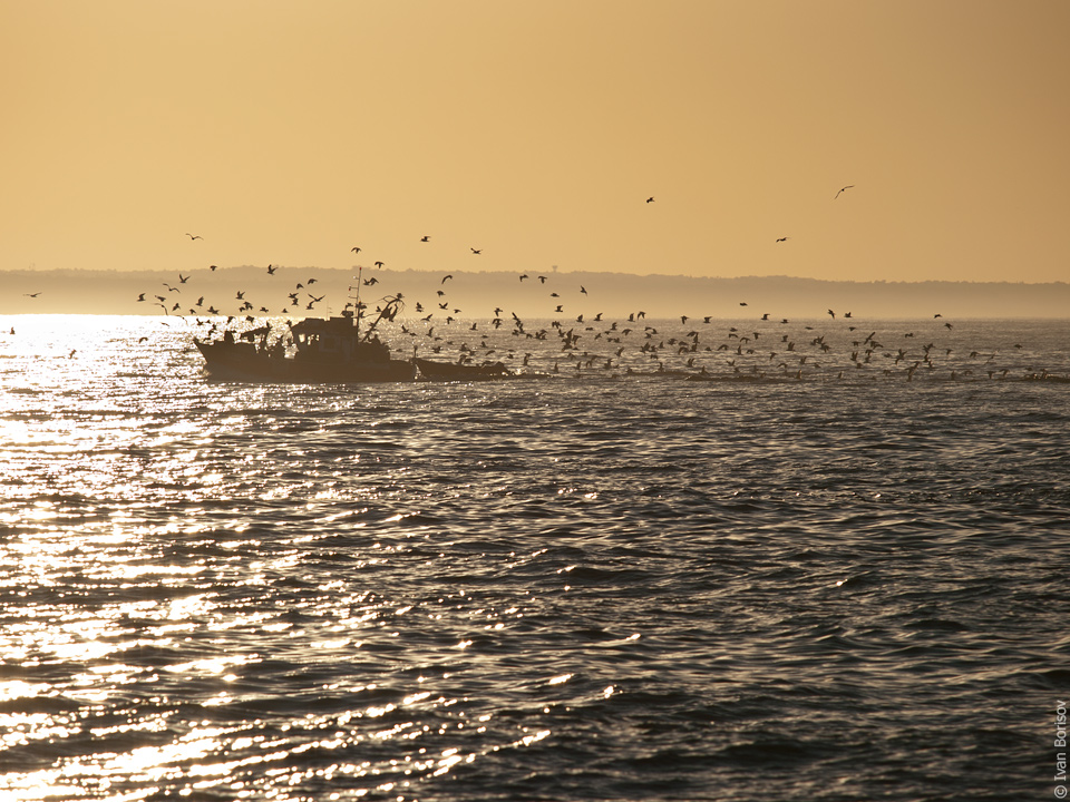 Fishing boat's going back at sunrise in Lagos, Portugal