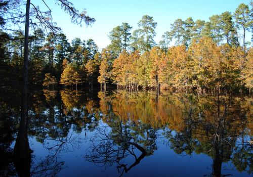 Cypress Pond 1211071534