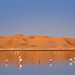 Migrating through the Sahara by bmse