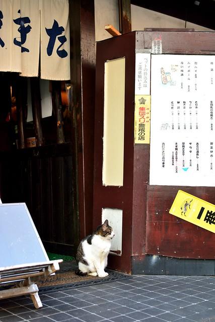 大須商店街7