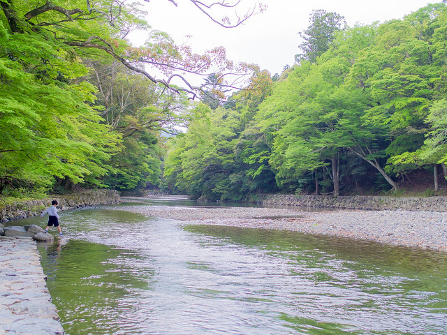 Isuzu river @ Ise Grand Shrine Naiku 五十鈴川(伊勢神宮内宮)