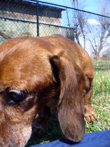 2012-03-17 - Dogs Outside - 0003