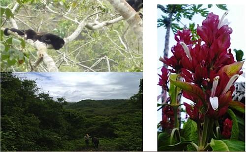canoa-ecuador-development
