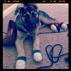 Max decked out in Christmas Spirit (or socks)