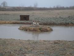 Pond - Photo of Bétête