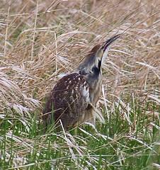 hawk(0.0), snipe(0.0), animal(1.0), prairie(1.0), fauna(1.0), bittern(1.0), beak(1.0), bird(1.0), wildlife(1.0),