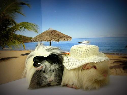 WE WON! The Petco Small Animal Photo Contest!