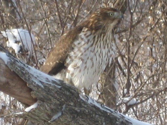 [Hawk #2]
