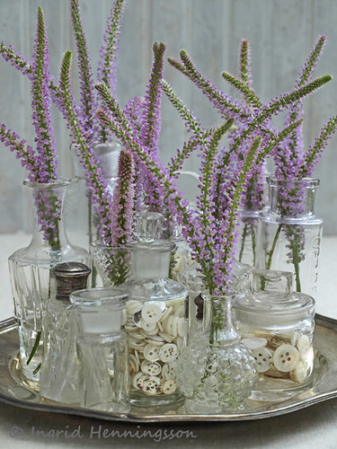 Pink Veronica in Vintage Bottles