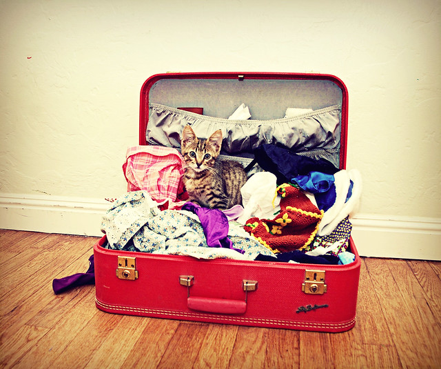 In a suitcase of doll clothes pickles flickr photo sharing