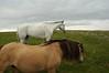 Sure, we've herd of horses.