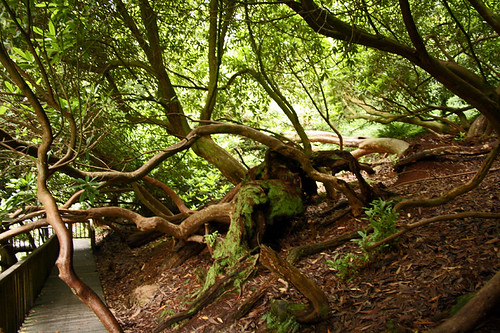 The lost garden of Heligan