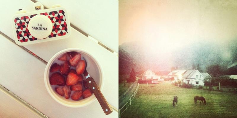instagram - july.