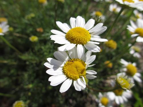 Flor con una visitante by treboada
