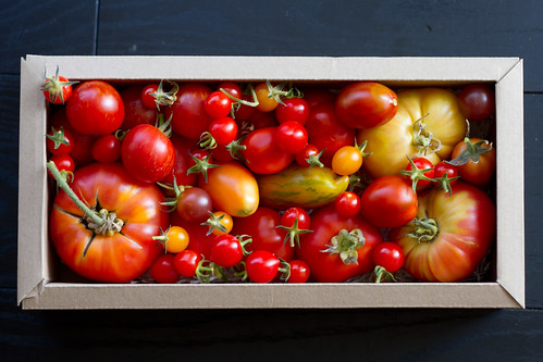 Tänane tomativalik / A selection of today's tomatoes