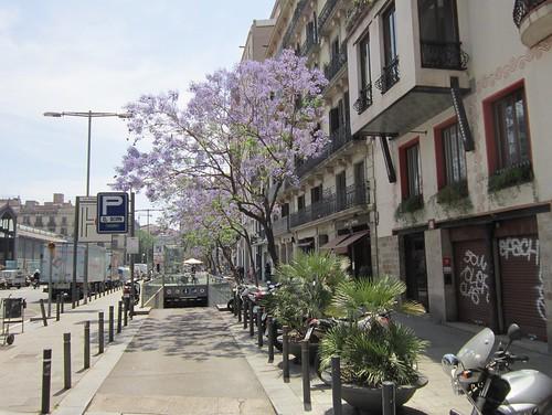 ハカランダの並木@バルセロナ 2012年6月7日 by Poran111