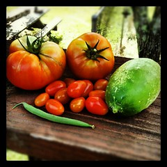 Todays mini harvest. #tomato #cucumbers #salad #igrewit #containergarden #deck #summer