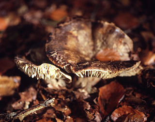 Old mushrooms