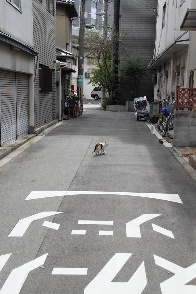 道行く三毛猫