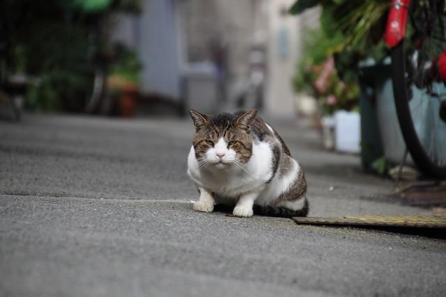 路地猫 2