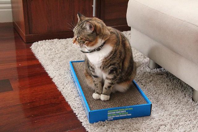 Scratching box