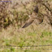 kestrel (Falco tinnunculus) take off-1 by Tales From The Riverbank