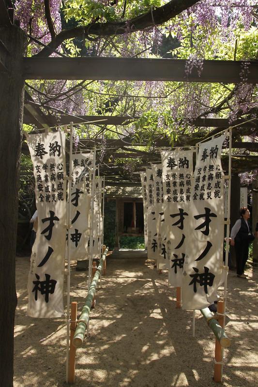 才の神の藤と普門寺