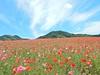 Photo:【埼玉県 5月 イベント特集】 ディー・ノイシ_Walkerplus By noishi_d