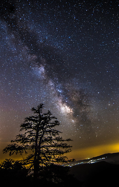 Milky Way rises over the tree