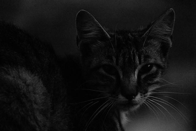 Bosa street Cat