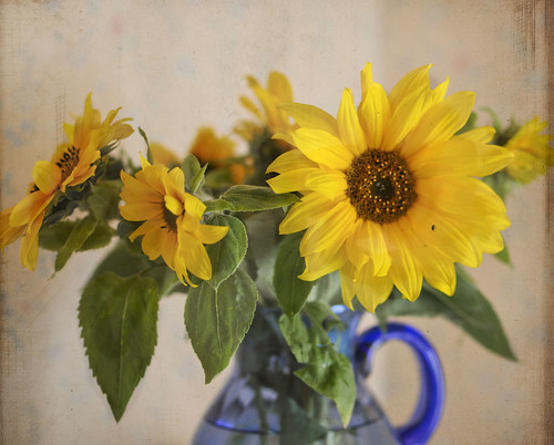 sunflowers by gunnel´s