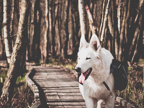 Hiking around Finjasjön