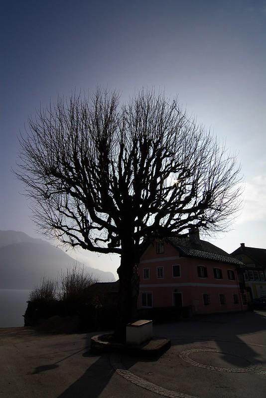 奧捷的樹~~