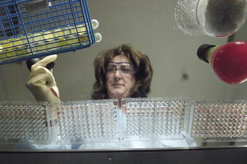 laboratory technician performing diagnostic testing
