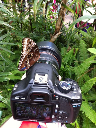 Butterfly on my camera