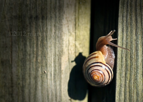 Snail In Colour