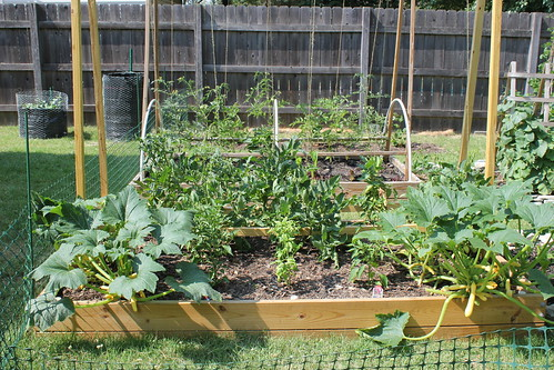 20120620. June garden status.