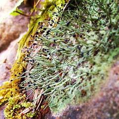 Weird Lichen