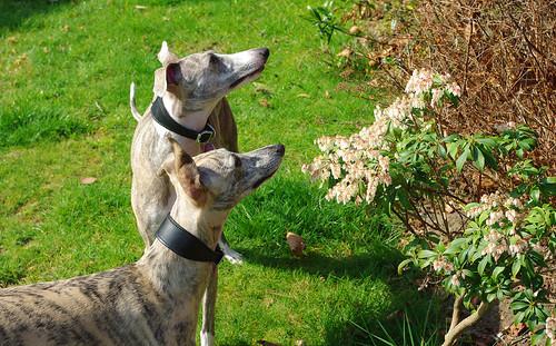 D6695  Gracie & Bella